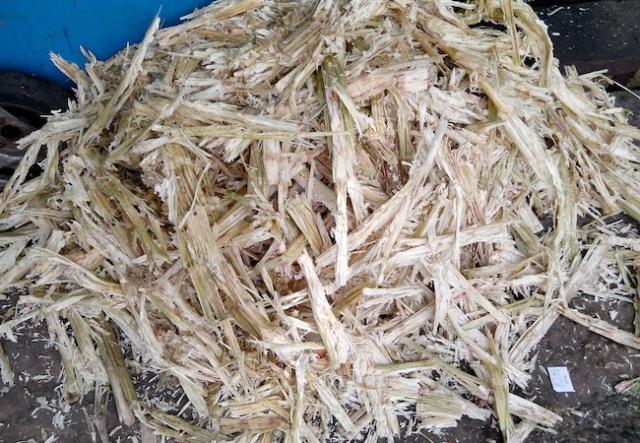 Sugarcane_wastes